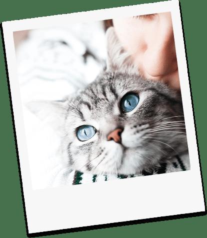 Centre de crémation pour chat à Sorgues